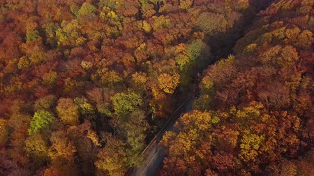Overhead aerial view of country road in sunny autumn forest.