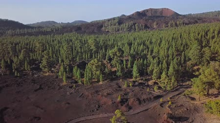 wasteland : Flying over pine forest in volcanic landscape near Mirador de Samara and Teide National Park, Tenerife, Canary islands, Spain