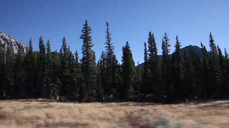 driving through forest and canadian rocky mountains in Jasper National Park Stok Video