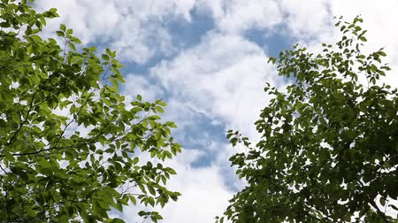 Looking up at the blue sky with clouds framed by gently blowing trees