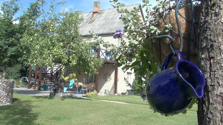 The blue jug on the tree at backyard