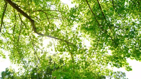 ethereal : beautiful trees with sunshine in the summer Stock Footage