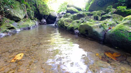 rapids : river rapids with stone and trees on the shore shot in taipei Stock Footage