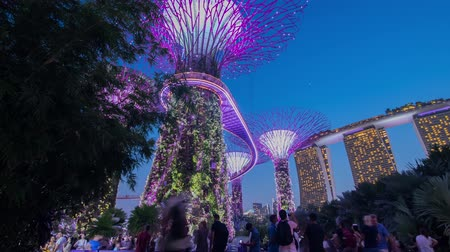 akşam : Singapore city, Singapore - July 24, 2018: Timelapse view Super-tree park at Marina Bay Sand