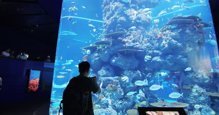 zátoka : Sentosa, Sinapore - July 22, 2018: Tourism travel to under water world SEA Aquarium Dostupné videozáznamy