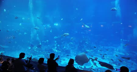 singapur : Sentosa, Sinapore - July 22, 2018: Tourism travel to under water world SEA Aquarium Stok Video