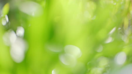 lágyság : slow motion of abstract green grass background