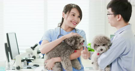 ветеринар : young female veterinarian doctor smile and hold the dog