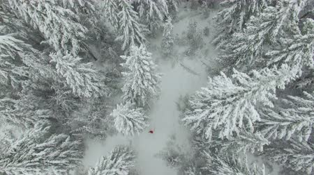 крытый : Aerial shot winter forest with woman in red Стоковые видеозаписи