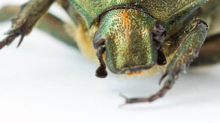 alienígena : Extreme closeup of beetle