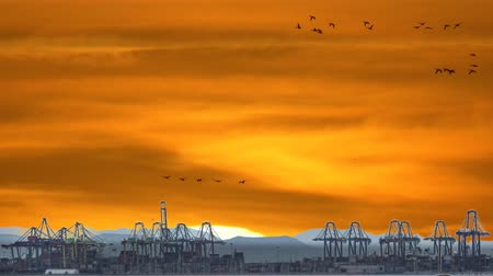 editing : Fast Timelapse of port cranes with sunset and birds Stock Footage