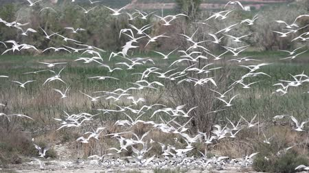 entire : Huge group of birds flying in super slow motion