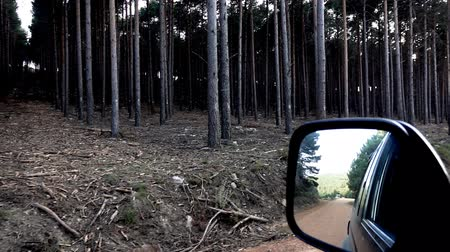 super car : Super slow motion of pine tree forest and car mirror