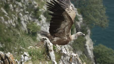riskli : Vulture starts flying in super slow motion
