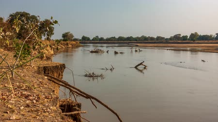 zambia : Time lapse of Luangwa river with trunks Stock Footage
