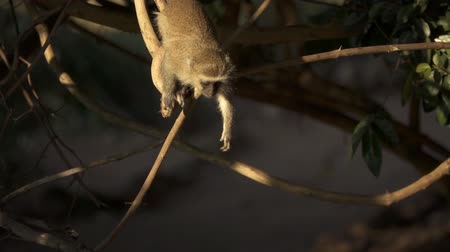 flexure : Small monkey jumps out of the branch in slow-mo