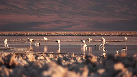 sentido : Salt lake with flamingoes with text space