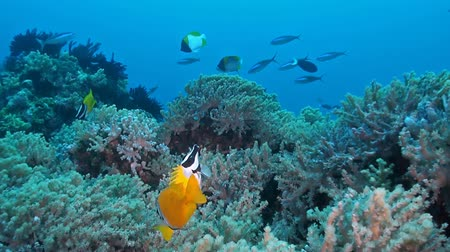 dorsal : Foxface & Rabbitfish Rabbitfish, found in shallow lagoons, have small, hare-like mouths, large dark eyes, and a peaceful temperament. They are colorful, and have well developed, venomous dorsal and anal fin spines. Use caution When handling fish thesis, a