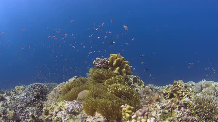 Colorful coral reef with plenty of fish 4k footage