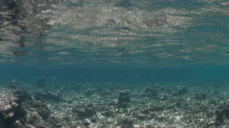 águas : Shallow waters of a coral reef. Half-half shot, a wreck at the background. 4k footage