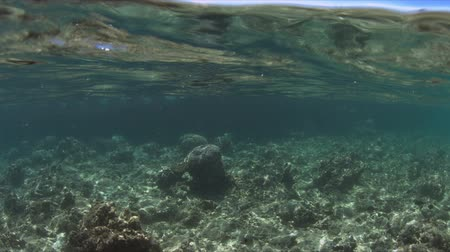 Shallow waters of a coral reef. Half-half shot, a wreck at the background. 4k footage
