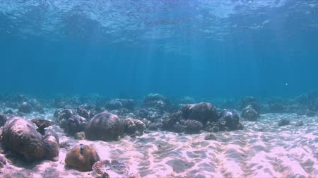 Shallow waters of a coral reef. 4k footage