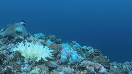 branqueamento : Coral bleaching is the result of water heating. Above-average seawater is caused by global warming