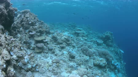 ortalama : When a coral reef this. Coral bleaching is the result of water heating. Above-average seawater is caused by global warming
