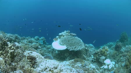 biodiverzitás : Bleached corals. Coral bleaching is the result of water heating. Above-average seawater is caused by global warming