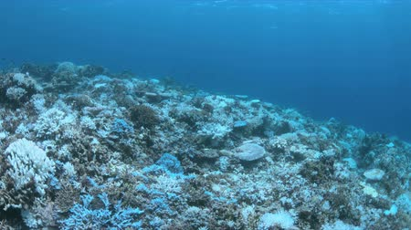 eredmény : Bleached corals. Coral bleaching is the result of water heating. Above-average seawater is caused by global warming
