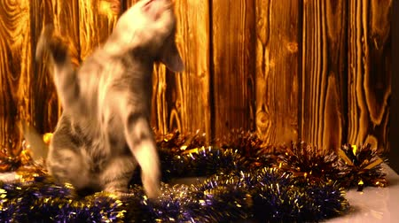 zahmetsiz : kitten playing with Christmas decorations