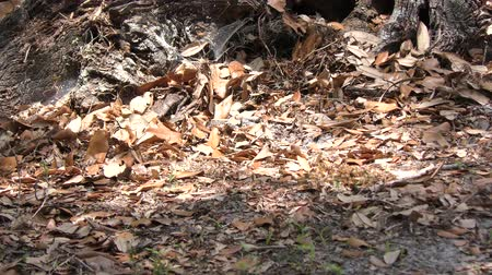 hnízdo : wild bees on the ground in Florida woods