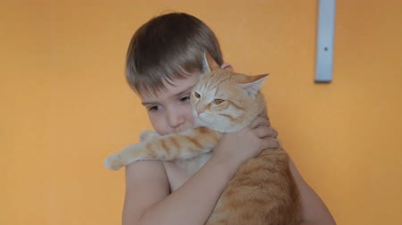caresses : Boy playing with red cat Stock Footage