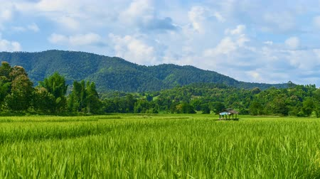 Time lapse little hut in the rice field with a mountain behind and the clouds moving fast. At Lamphun is located in northern Thailand.