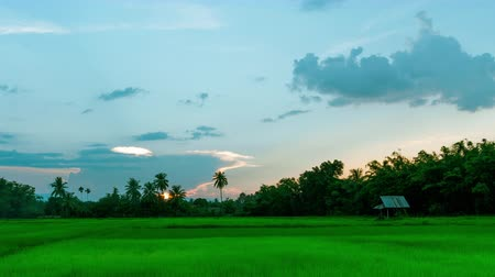 Time lapse sunset and fast moving clouds. Little cottage in the rice field at evening. Stok Video