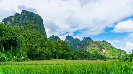 Time lapse clouds moving on Limestone mountains and rice field.