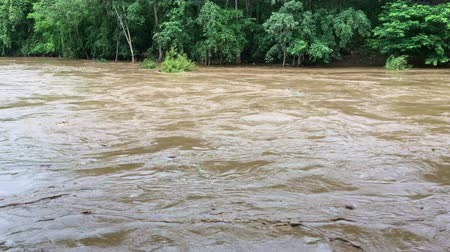 visszaad : Flooding in forest during the rainy season. The cause of flooding was caused by forest destruction. Concept of stop deforestation campaign and global warming.