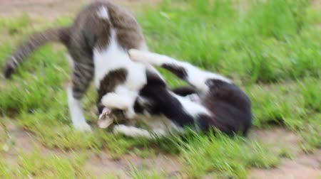 Two little cats teasing each other on the lawn in morning. Stok Video