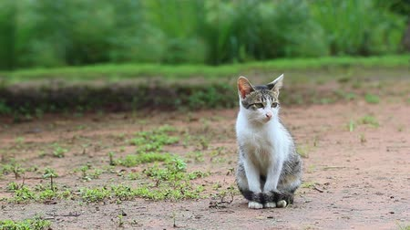 jovial : Cats face to the left and sit on the ground in the morning.