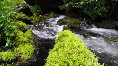 mossy forest : Forest stream running over mossy rocks