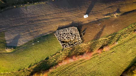 kapatmak : Aerial 4k drone video of sheep in sheepfold in the mountains. Raising in altitude, zoom out in soft morning lights Stok Video