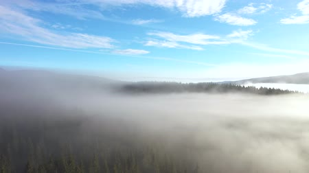 transilvânia : Flying above clouds. Aerial drone 4k movie of sunrise, misty morning and forest in the mountains