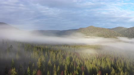 Трансильвания : Flying above clouds. Aerial drone 4k movie of sunrise, misty morning and forest in the mountains