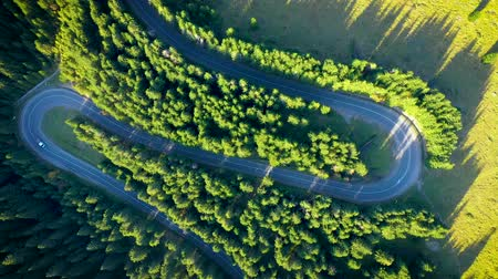 transilvânia : Aerial view of green pine forest and a country serpentine road captured from a drone above