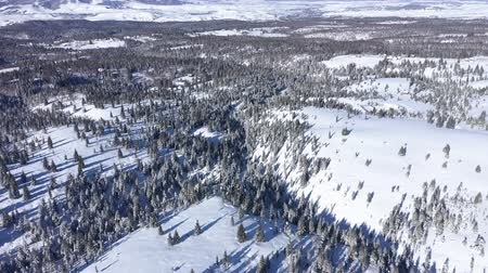 snow covered spruce : Winter aerial 4k drone view of snow covered fir trees and forest in the mountains