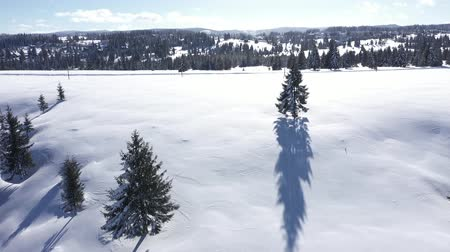 bosque : Winter aerial 4k drone view of snow covered fir trees and forest in the mountains