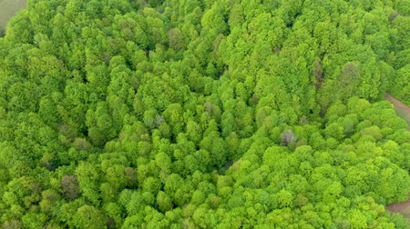 üzerinde : Aerial view of a virgin beech forest in Romania, one of the last primary forests of Europe
