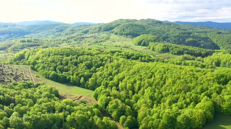 transilvânia : Flying over a green beech tree forest in the spring. Aerial 4k drone view