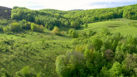 Aerial 4k view of green countryside hills, meadow and forest from a drone