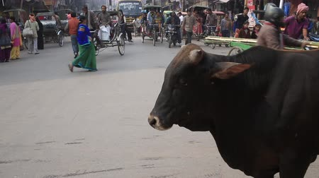 rickshaw : Varanasi, India, December 2015. A cow in the midst of the heavy traffic of all kinds of vehicles and people. Stock Footage